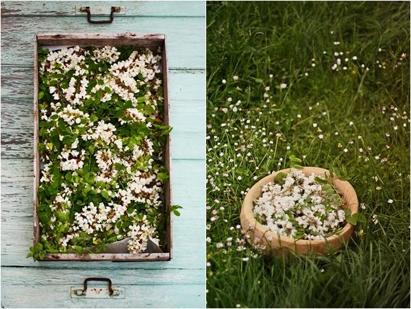 Cuisinez les fleurs -  Fleurs d'acacia Fleursacacia2