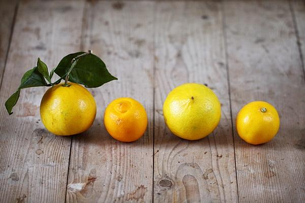 bergamote_citronbeldi2.JPG