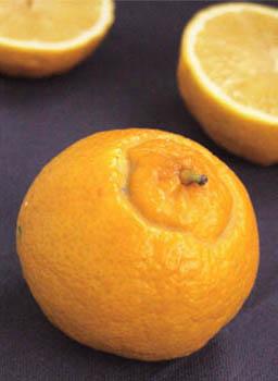 moelleux à la bergamote